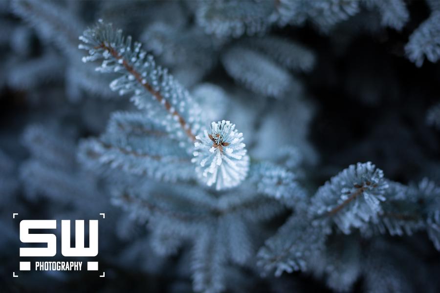 SW_Plant